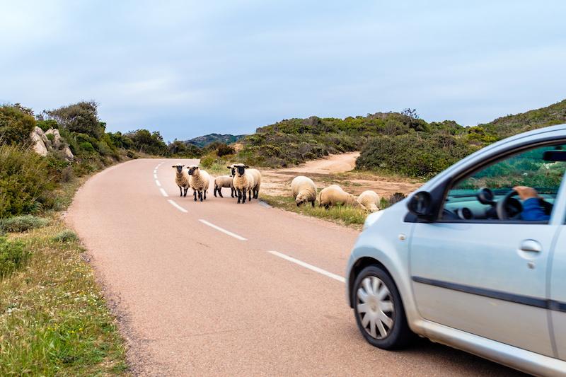 location voiture Corse